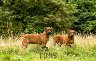 Ronnie & Reggie - Paws in Action is a Professional Dog Photographer