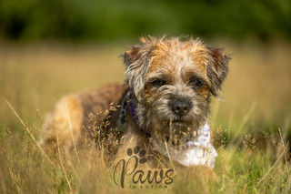 Hugo - Paws in Action is a Professional Dog Photographer