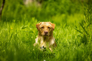 Stanley - Paws in Action is a Professional Dog Photographer