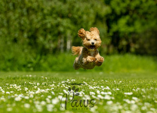 Teddie - Paws in Action is a Professional Dog Photographer