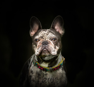 Rowan - Paws in Action is a Professional Dog Photographer