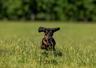 Blake - Paws in Action is a Professional Dog Photographer