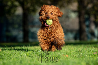 Teddi - Paws in Action is a Professional Dog Photographer