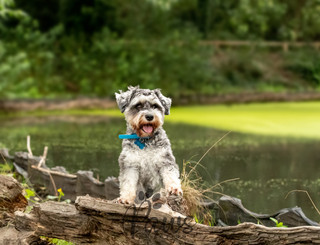 Waldo - Paws in Action is a Professional Dog Photographer
