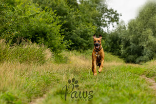 Reggie - Paws in Action is a Professional Dog Photographer