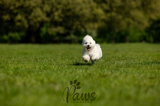 Mason - Paws in Action is a Professional Dog Photographer