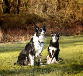 Shadow and Tik Tik - Paws in Action is a Professional Dog Photographer