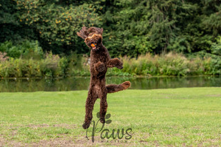 Isla -Paws in Action is a Professional Dog Photographer