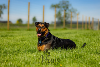 Rex - Paws in Action is a Professional Dog Photographer