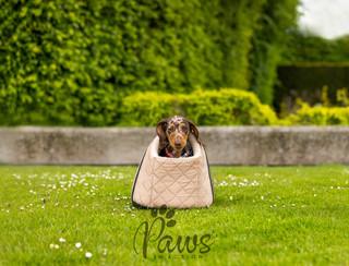 Lilo - Paws in Action is a Professional Dog Photographer