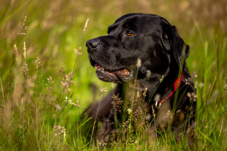 Inka - Paws in Action is a Professional Dog Photographer