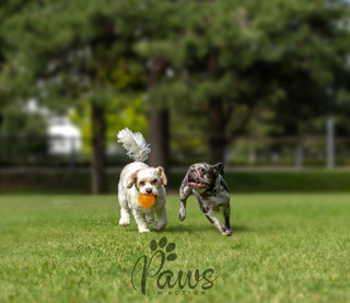 Tusk and Rowan - Paws in Action is a Professional Dog Photographer