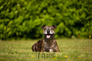 Rocky - Paws in Action is a Professional Dog Photographer