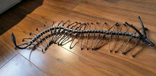 stock centipede.jpg