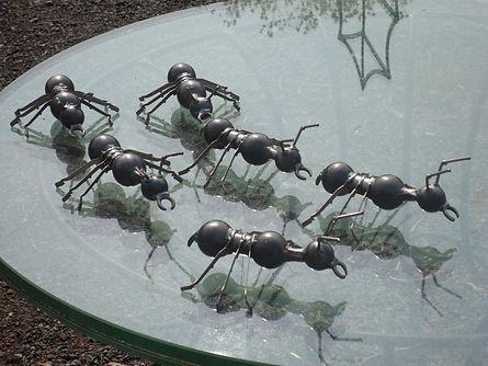 six ants 003.JPG