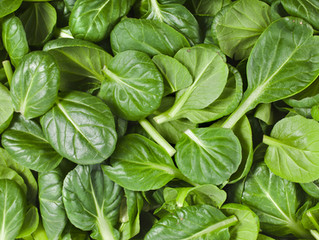 Spinach is a Brain Food