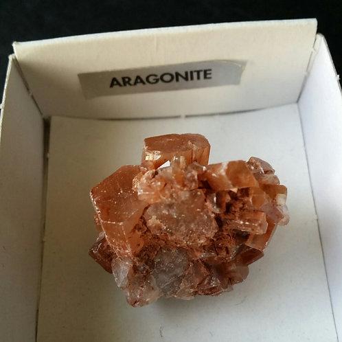Aragonite pisolite brut de couleur brune
