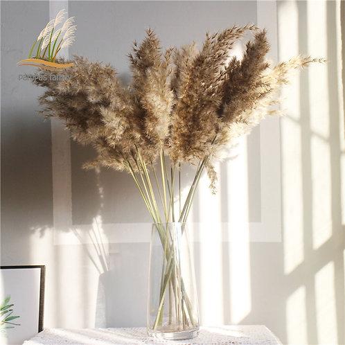 Dried Fluffy Pampas Grass