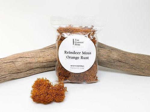 Reindeer Moss - Orange Rust