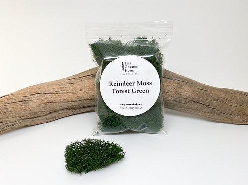 Reindeer Moss - Forest Green