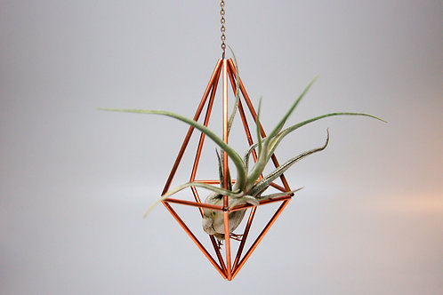 Design 19 - Hanging Copper Diamond Geometric Ornament (Himmeli) with Air Plant