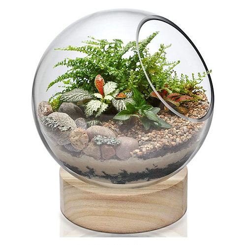 Large Glass Orb Terrarium Glass with Wood Base Stand