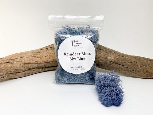 Reindeer Moss - Sky Blue