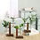 Thumbnail: Two-Tiered Set of 2 Propagation Bud Glass Vases - Plant Starter Kit
