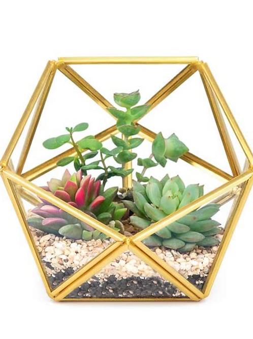 """4.5"""" Wide Gold Geometric Glass Terrarium"""