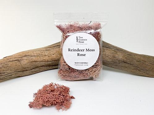 Reindeer Moss - Rose