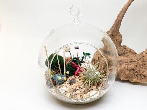 Design 9 - Large 6-inch Hanging Globe Terrarium Kit