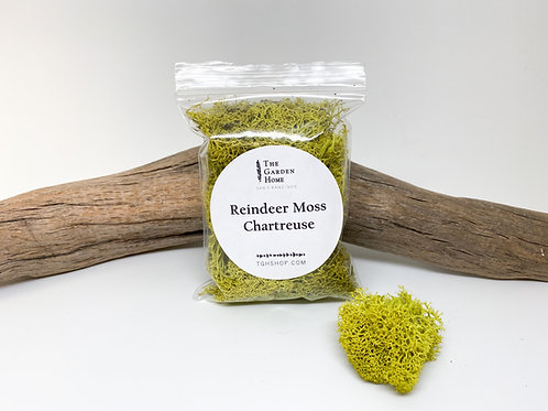 Reindeer Moss - Chartreuse