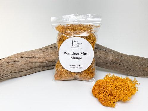 Reindeer Moss - Mango