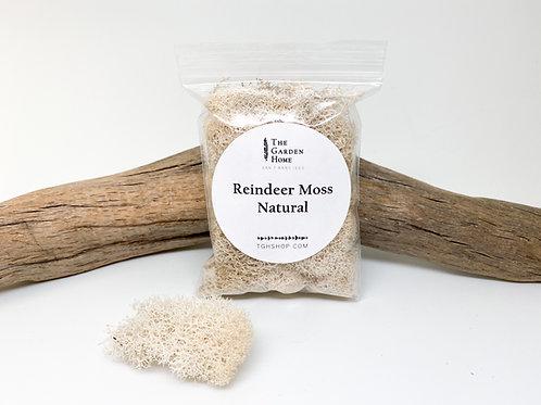 Reindeer Moss - Natural