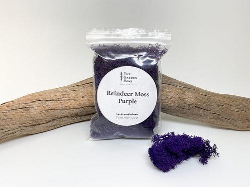 Reindeer Moss - Purple