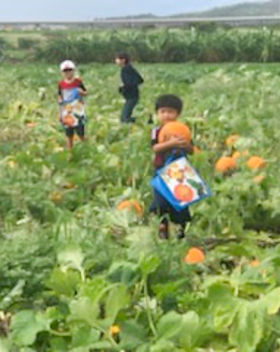 Aloun Farm Pumpkin Patch Album
