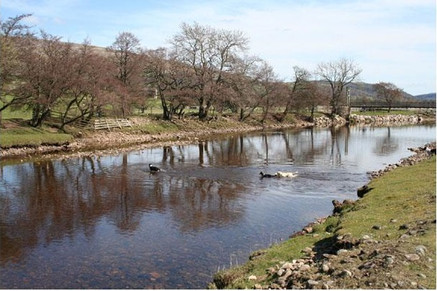 dogs swimming in the river tees