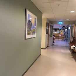 Eika hos sjukeheimen i Ulsteinvik