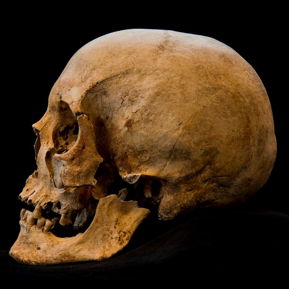 C12-16 Male skull 653SJ side.jpg