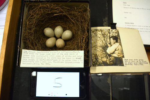 a box with a nest and eggs on the left and a photo of a man up a tree on the right. An iphone showing the number 5 is at the bottom.