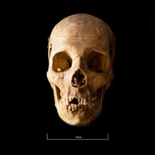 Skull FR30 - 9145.jpg