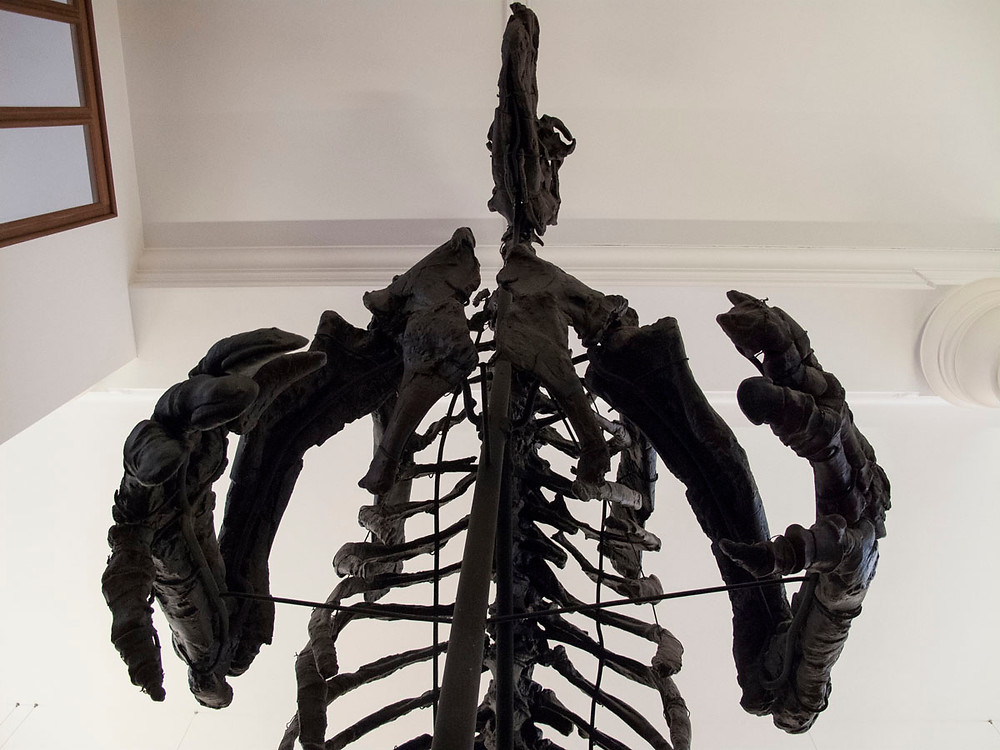 Iguanodon skeleton ready for a hug