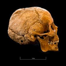 Skull 5082G - 6407.jpg