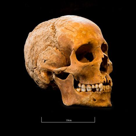 Skull 5082G - 6409.jpg