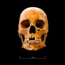 Skull 5082G - 6392.jpg