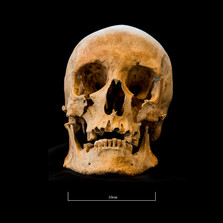 Skull 653SJ - 6234.jpg