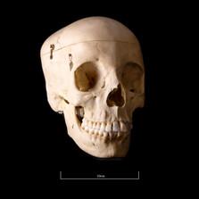 Skull BB08 - 9197.jpg