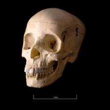 Skull BB08 - 9187.jpg