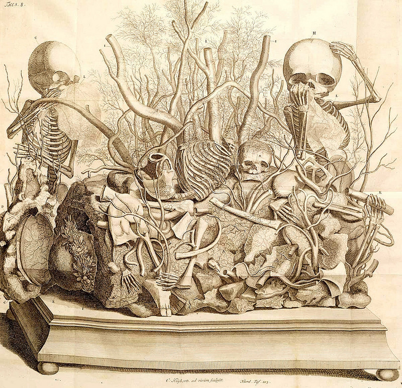 Engraving of fetus skeletons arranged by Frederick Ruysch