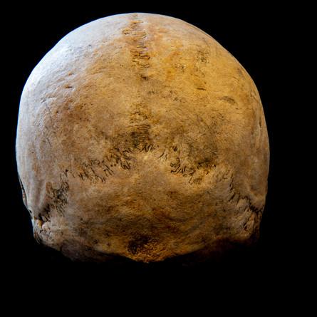 C12-16 Male skull 0121SJ back.jpg
